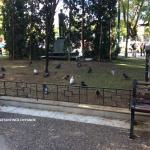 Οι άγνωστοι συγκάτοικοί μας στην πόλη: Ζώα, πουλιά και έντομα