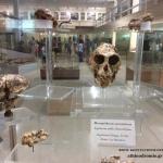 Πικέρμι, παγκόσμιας αξίας απολιθώματα στην Αττική!