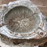 Γεωλογία και απολιθώματα, κατανοώντας τον φυσικό μας κόσμο