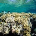 Κοραλλιογενείς Ύφαλοι, δείκτες της «κλιματικής υγείας» της Ελλάδας
