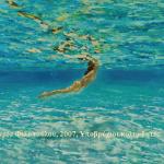 Τραγούδια για το Καλοκαίρι και τη Θάλασσα